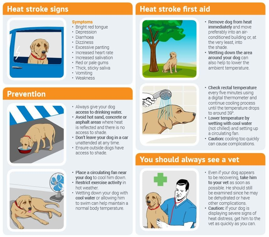 Temperature Guidelines for Leaving your Dog In a Car